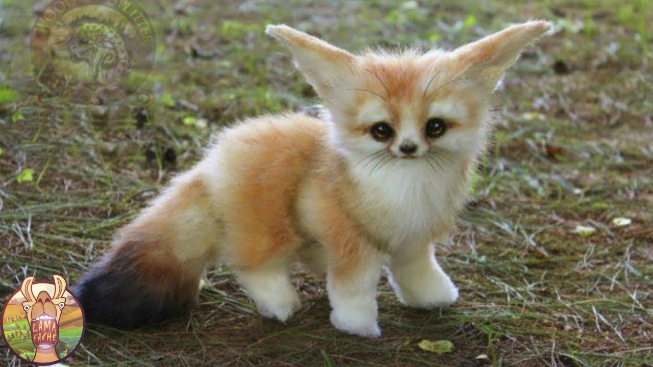 Blog animaux : quels sont les animaux laitiers ?